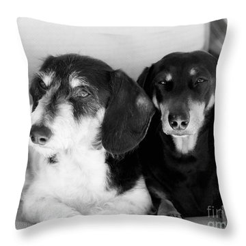 Dapper Doxies Throw Pillow