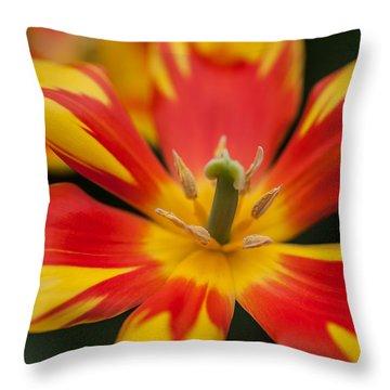 Dappled Tulip 1. The Tulips Of Holland Throw Pillow
