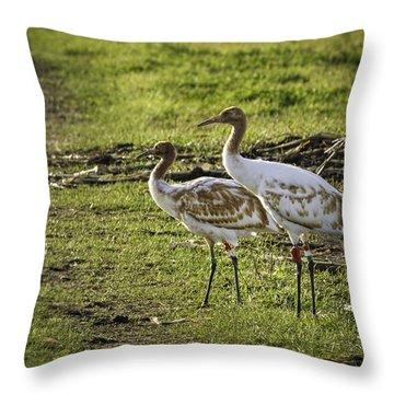 Dar Whooping Cranes Throw Pillow