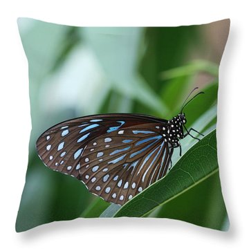 Dark Blue Tiger Butterfly #2 Throw Pillow by Judy Whitton
