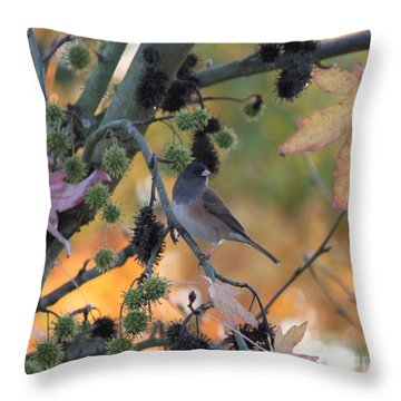 Dark Eyed Junco 2 Throw Pillow by Erica Hanel