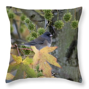 Dark Eyed Junco Throw Pillow by Erica Hanel