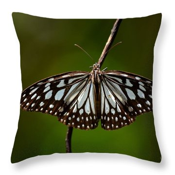 Dark Glassy Tiger Butterfly On Branch Throw Pillow by Imran Ahmed