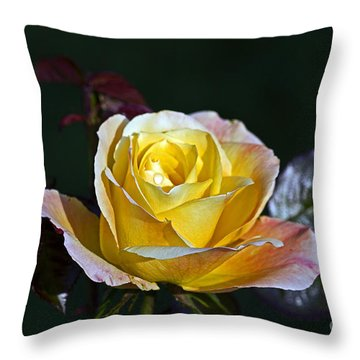 Throw Pillow featuring the photograph Day Breaker Rose by Kate Brown