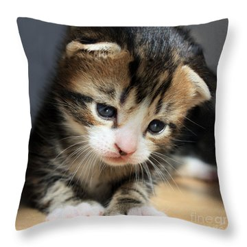 Daydreamer Kitten Throw Pillow