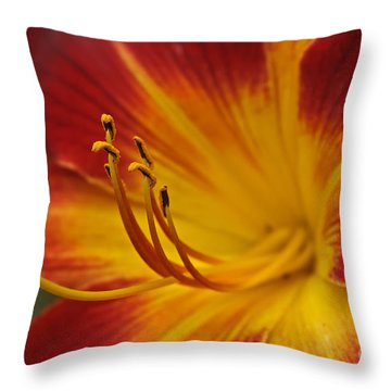 Daylily Close Up II Throw Pillow