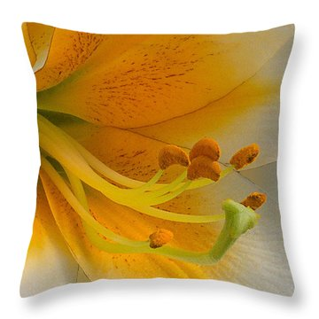 Gold Daylily Close-up Throw Pillow