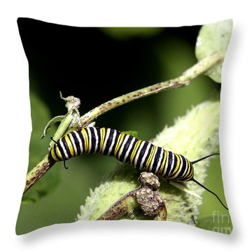 Deep In The Green - A Caterpillars Life Throw Pillow
