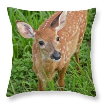 Deer 42 Throw Pillow