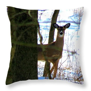 Throw Pillow featuring the photograph Deer At Park by Eric Switzer