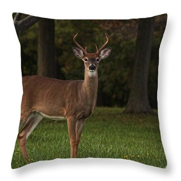 Throw Pillow featuring the photograph Deer In Headlight Look by Tammy Espino