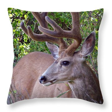 Throw Pillow featuring the photograph Buck In The Woods by Athena Mckinzie
