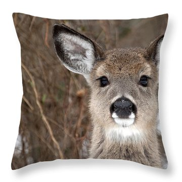 Deer Throw Pillow by Jeannette Hunt