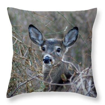 Throw Pillow featuring the photograph Deer by Karen Silvestri