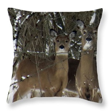 Deer Posing For Picture Throw Pillow