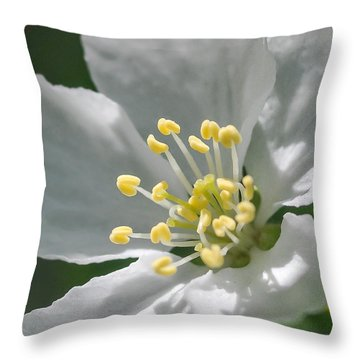 Delcate Widflower With Beautiful Stamen Throw Pillow