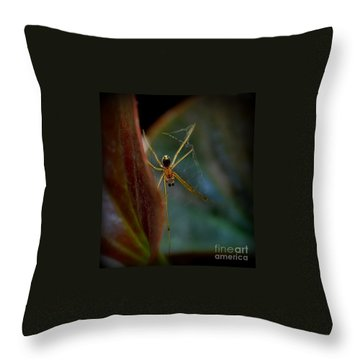 Throw Pillow featuring the photograph Delicate  Constructor by Marija Djedovic