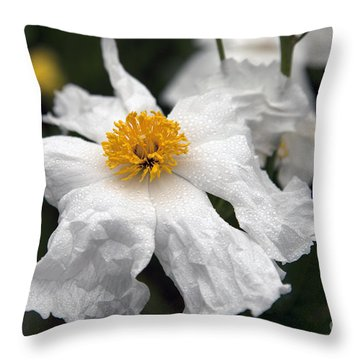 Delicate Dew Throw Pillow by Amanda Barcon