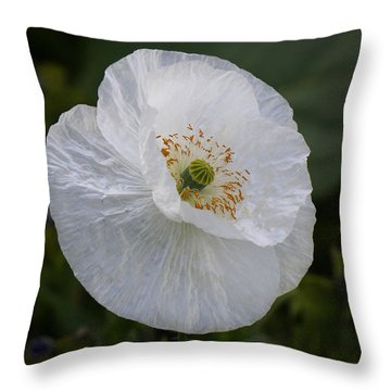 Throw Pillow featuring the photograph Delicate Poppy by Inge Riis McDonald
