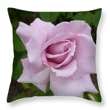 Throw Pillow featuring the photograph Delicate Purple Rose by Lingfai Leung