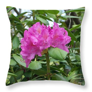 Throw Pillow featuring the photograph Delicate Beauty by Roberta Byram