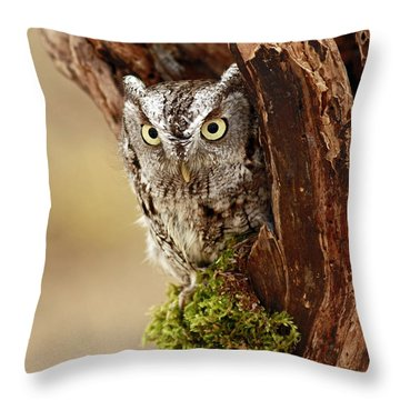Delighted By The Eastern Screech Owl Throw Pillow by Inspired Nature Photography Fine Art Photography