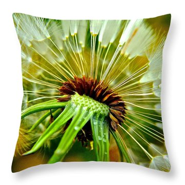 Delightful Dandelion Throw Pillow by Frozen in Time Fine Art Photography