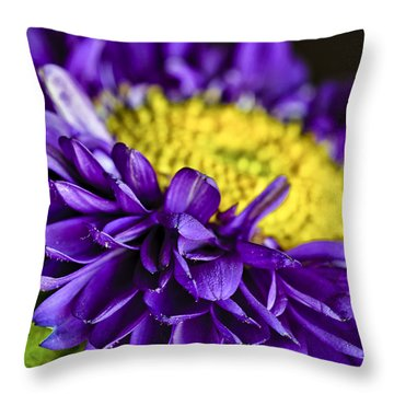 Delights The Eye Throw Pillow by Christi Kraft