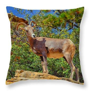 Desert Bighorn Sheep Throw Pillow by Greg Norrell