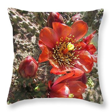 Desert Color Throw Pillow