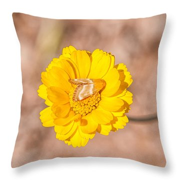Desert-marigold Moth Throw Pillow