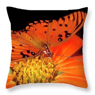 Gulf Fritillary Throw Pillows