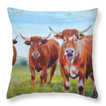 Devon Cattle Throw Pillow