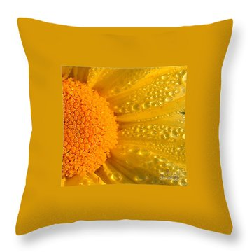 Throw Pillow featuring the photograph Dew Drops On Daisy by Terri Gostola