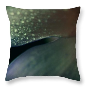 Dew Drops On Dogwood Flower  Throw Pillow