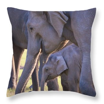 Dhikala Elephants Throw Pillow