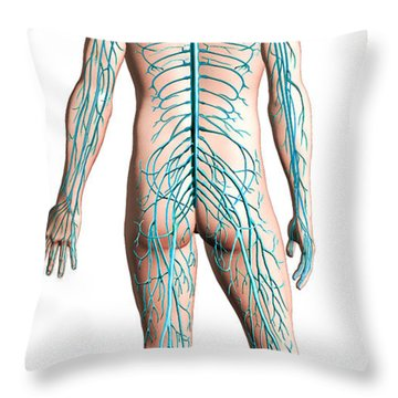 Diagram Of Human Nervous System Throw Pillow by Leonello Calvetti