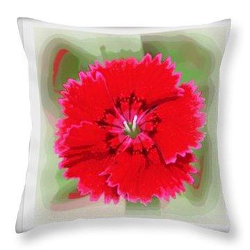 Dianthus Barbatus Throw Pillow