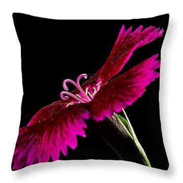 Dianthus Throw Pillow