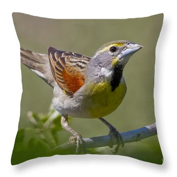 Dickcissel Throw Pillow by Gary Holmes