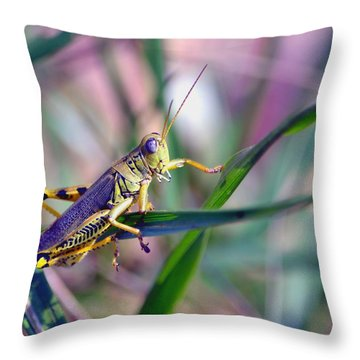 Differential Throw Pillow