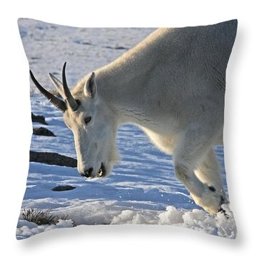 Digging For Dinner Throw Pillow by Jim Garrison