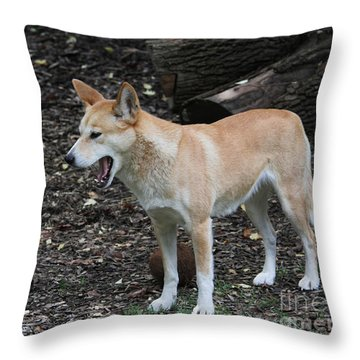 Dingo #2 Throw Pillow