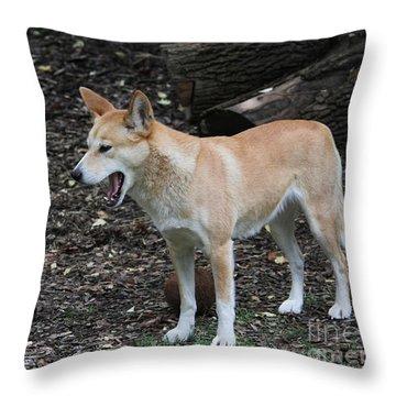 Dingo #2 Throw Pillow
