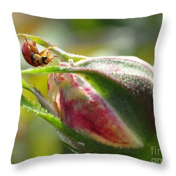 Throw Pillow featuring the photograph Dinner Is Ready by Debby Pueschel