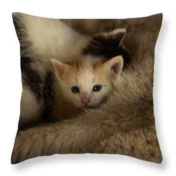 Dinner Time 2 Throw Pillow