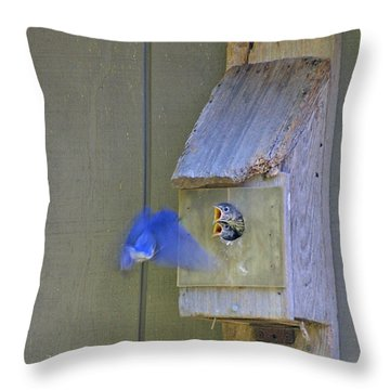 Dinner Time Throw Pillow by Dodie Ulery