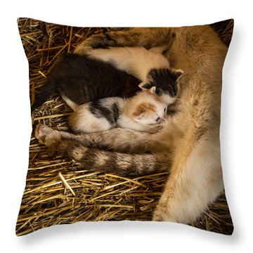 Throw Pillow featuring the photograph Dinner Time by Jay Stockhaus