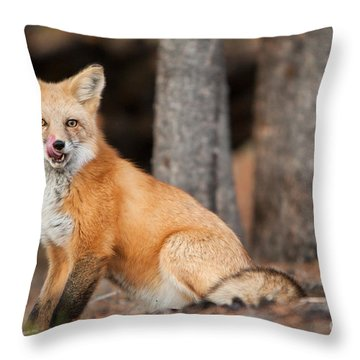 Dinner Was Good Throw Pillow