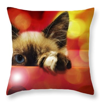 Andee Design Kitties Throw Pillows